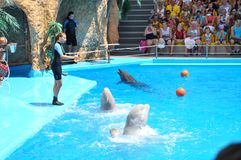 Odessa dolphinarium Nemo holds an unusually wonderful show with dolphins. Stock Image