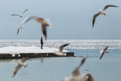 Odessa, Ucrânia - em fevereiro de 2014 - um homem está na borda de um cais congelado do inverno apenas Em torno da gaivota do voo Imagem de Stock
