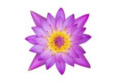 Odgórnego widoku purpurowy lotos odizolowywający na białym tle zdjęcia royalty free