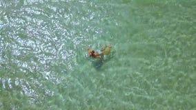 Odgórnego widoku kobiety dopłynięcie w turkusowej wodzie morskiej Kobieta cieszy się kąpanie w krysztale - jasny morze na raj pla zdjęcie wideo
