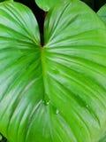 Odgórnego widoku królewiątko serce, zielony drzewo jako tło abstrakta liść wzoru bezszwowa tekstura Zdjęcia Royalty Free