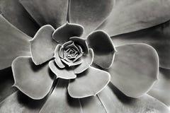Odgórnego widoku kwiat Zdjęcie Stock