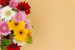 Odgórnego widoku kwiatu bukiet stokrotki przestrzeń dla teksta zdjęcie royalty free