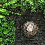 Odgórnego widoku kwiatu garnek zdjęcie stock