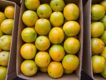 Odgórnego widoku pomarańcze w pudełkach Obraz Royalty Free