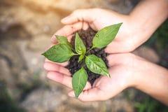Odgórnego widoku wizerunek ręki trzyma glebowego i małego drzewa rosnąć Fotografia Stock