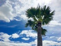 Odgórnej połówki pojedynczy cukrowy drzewko palmowe pod niebieskim niebem i biel chmurniejemy obraz royalty free