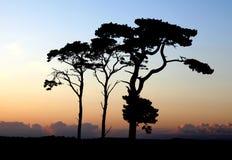 odgórni wzgórzy drzewa Fotografia Royalty Free