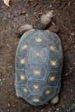 Odgórny żółwia widok obraz royalty free