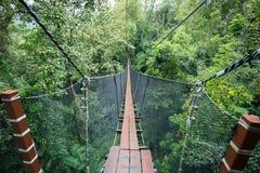 Odgórny drzewny odprowadzenie most Zdjęcia Royalty Free