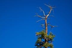 odgórny drzewo Zdjęcie Royalty Free