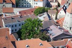 odgórny Tallinn stary widok Obrazy Stock