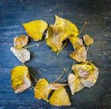 odgórny widok żółci jesienni liście składał w postaci okręgu Obrazy Royalty Free