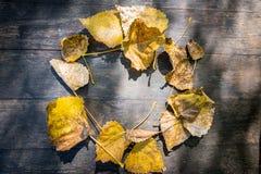 odgórny widok żółci jesienni liście składał w postaci okręgu Zdjęcia Royalty Free