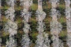 Odgórny widok biali drzewa Zdjęcie Stock