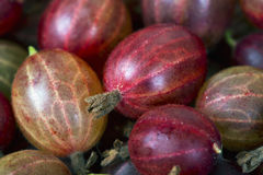 Odgórny widok czerwona agrestowa owoc Zdjęcie Stock