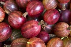 Odgórny widok czerwona agrestowa owoc Obraz Royalty Free