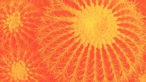 Odgórny widok Echinocactus, round duży kaktus z dwa małymi kaktusami, horyzontalny, jaskrawy pomarańczowy duotone, fotografia royalty free