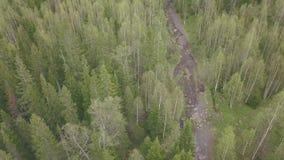 Odgórny widok grupa turyści chodzi wzdłuż lasowego śladu klamerka Grupa turyści iść wierzchołek góra wzdłuż ścieżki zbiory