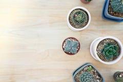Odgórny widok i kopia z drewnianym tłem, rozmaitość kaktus w kwiatu garnku zdjęcie royalty free