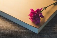 Odgórny widok i zamyka w górę wizerunku na pięknym jaskrawym różowym goździku o Fotografia Royalty Free