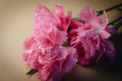Odgórny widok i zamyka w górę wizerunku na pięknym jaskrawym różowym goździku o Obraz Stock