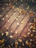Odgórny widok jesień liście obraz royalty free