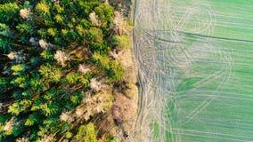 Odgórny widok krawędź między lasem i zieleni polem Natury tło tekstury granica Fotografia Stock
