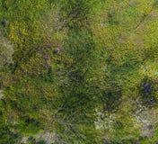 Odgórny widok kwiat polana w ogródzie Dandelions są żółtymi kwiatami i inny kwitnie Obraz Stock
