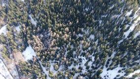 Odgórny widok na długiej drodze zakrywających w śniegu masywnym lesie i, 4k zbiory