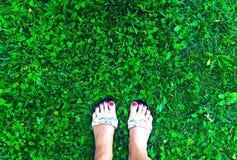 Odgórny widok na trawie z ciekami zdjęcie stock