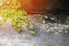 Odgórny widok na zewnątrz tła, przez światła w ranku Mały zielony drzewo na cementowej podłoga i opróżnia przestrzeń dla teksta Zdjęcia Stock