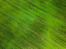 Odgórny widok Naturalna zielonej trawy tekstura, widok z lotu ptaka park obraz royalty free