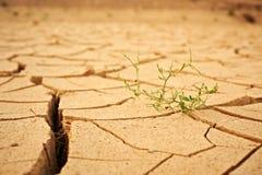 Odgórny widok pękał suchą ziemię z zielonej rośliny abstrakta tłem Zdjęcia Stock