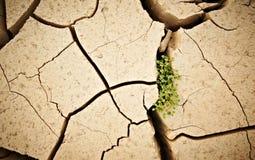 Odgórny widok pękał suchą ziemię z zielonej rośliny abstrakta tłem Zdjęcie Royalty Free