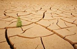 Odgórny widok pękał suchą ziemię z zielonej rośliny abstrakta tłem Obrazy Royalty Free