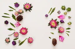 Odgórny widok piękni kolorowi kwiaty na białym tle Zdjęcia Royalty Free