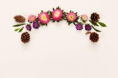 Odgórny widok piękni kolorowi kwiaty na białym tle Obrazy Royalty Free