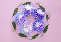 Odgórny widok piękny kwiatu przygotowania w okręgu Obraz Royalty Free