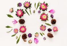 Odgórny widok piękni kolorowi kwiaty Fotografia Royalty Free