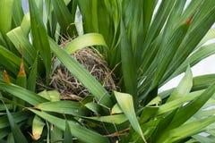 Odgórny widok ptasi gniazdeczko na drzewie Zdjęcia Stock