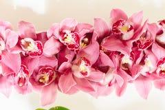 Odgórny widok purpurowy płatek orchidei arrangment Fotografia Stock