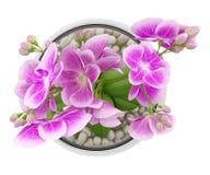 Odgórny widok purpurowy storczykowy kwiat w szklanej wazie odizolowywającej na bielu Fotografia Stock