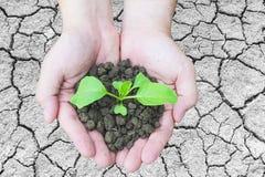 Odgórny widok ręki trzyma małego zielonej rośliny dorośnięcie w brown zdrowej ziemi nad krakingowym ziemi powierzchni tłem Fotografia Stock