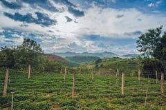 Odgórny widok rolnictwo tarasował ryż i budę na wzgórzu Veitnam Obraz Royalty Free