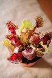 Odgórny widok Sarracenia carnivore roślina obraz stock
