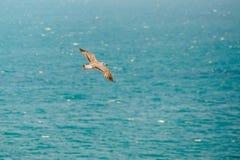 Odgórny widok sylwetka latający seagull Ptak lata nad morzem Zdjęcia Stock