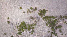 Odgórny widok tekstura biały żwir z drzewami klamerka Naturalny tło z drzewami, żwir teksturą, kamieniami i turystami, zbiory wideo