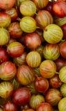 Odgórny widok zieleni i czerwieni agresta owoc Zdjęcia Royalty Free