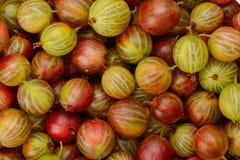 Odgórny widok zieleni i czerwieni agresta owoc Obrazy Royalty Free